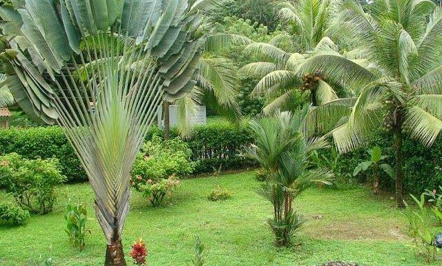 Costa Rica Casa en venta ROSA
